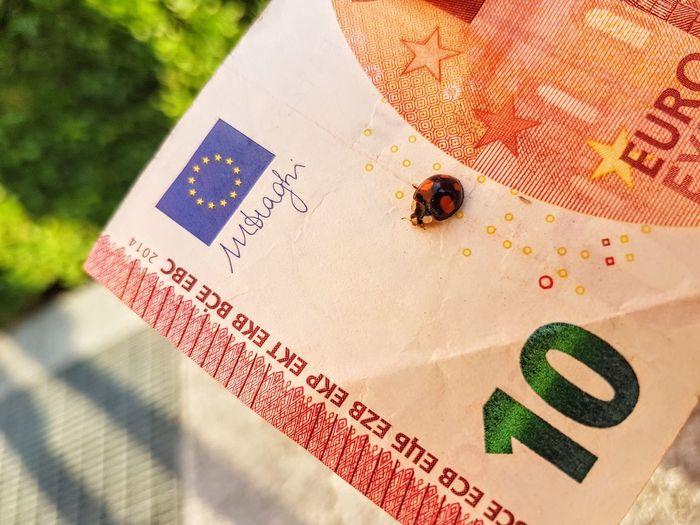 Close-up of ladybug on banknote