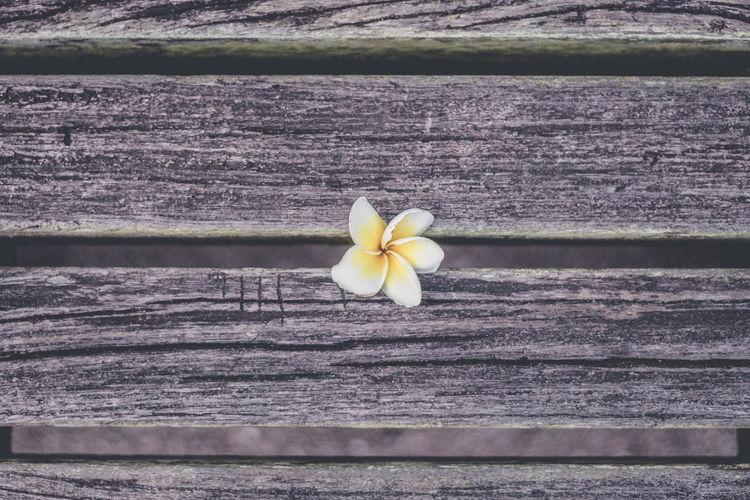 Close-up of frangipani on table