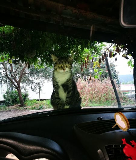 Car One Animal Transportation Car Interior Animal Themes Day No People Indoors  Land Vehicle Plant Pets Nature