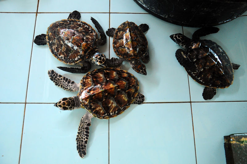 save the turtle Animals INDONESIA Lombok Mature Adult Save Turtle Sea Sea Animal Turtle Turtles Water