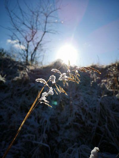 Flower Sunlight