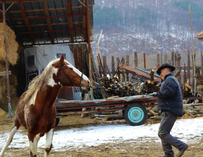 City Day Farm Friendship Grass Horse Men Mountain Nature Outdoors People Ranch Sky Snow Stables Training Village Wild Wildlife Winter Wintertime Working