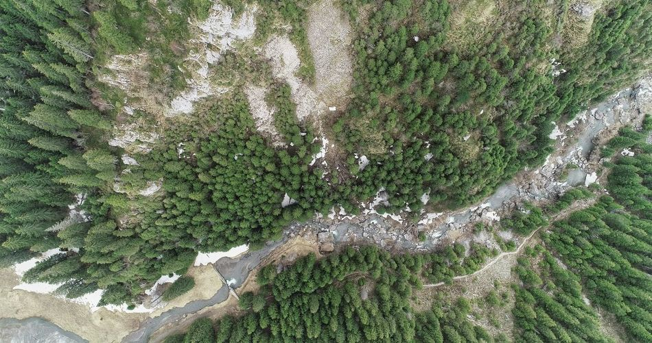 Aerial Photography Picea Abies River Aerial View Aerial Shot Summer Exploratorium Backgrounds Full Frame High Angle View Close-up Grass Green Color Plant Detail LINE Young Plant