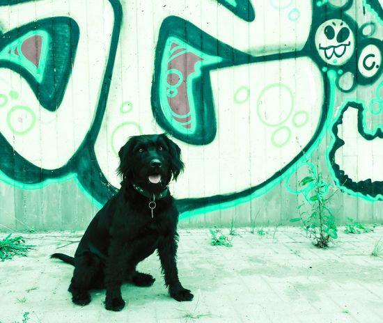 Graffiti Dog Emma ♡ Labradoodle OpenEdit Urban First Eyeem Photo EyeEm Best Shots EyeEm EyeEm Best Edits