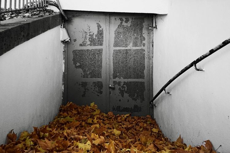 Dry leaves on wall of building