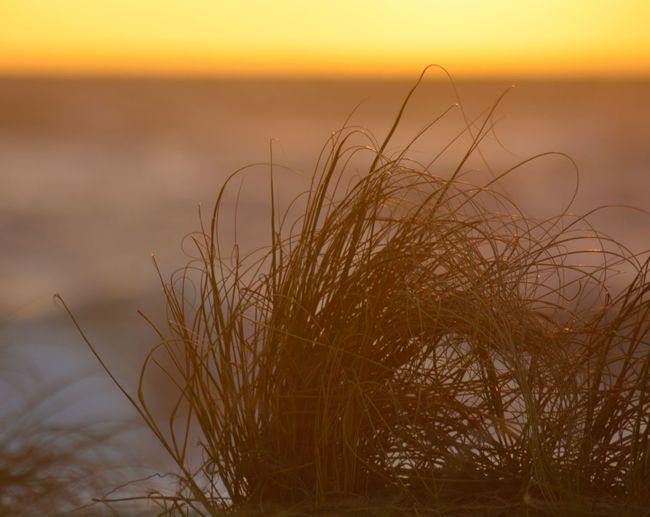 Beach Grass In The Morning Light Nature Beauty In Nature Tranquility No People Growth Plant Outdoors Tranquil Scene Close-up Scenics Sky Water Day