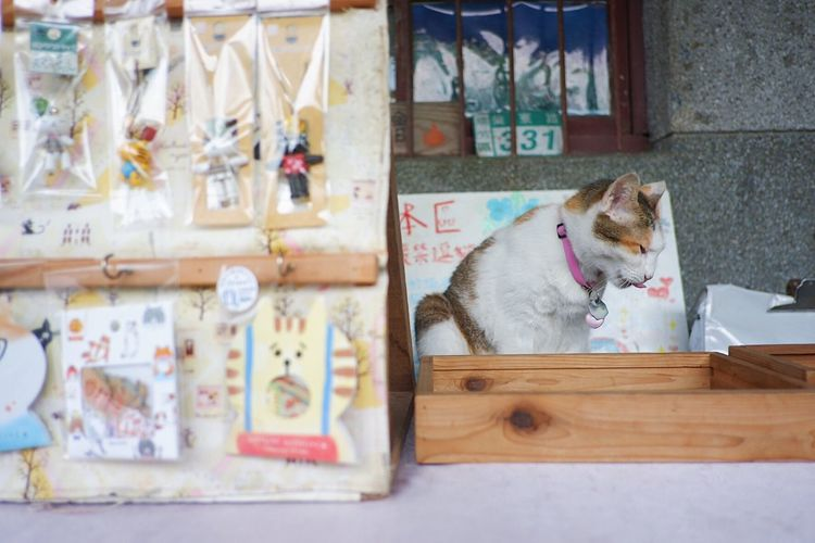 Hungry cat Taiwan Aroundtheworld Travel Cat Village Cat One Animal Domestic Pets Animal Themes Domestic Animals Mammal Animal Vertebrate No People Canine Indoors  Portrait Sitting Wall - Building Feature Relaxation Day