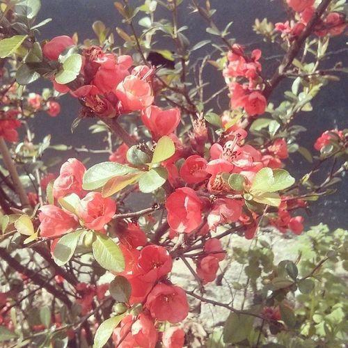 Achichliebeblumenbilder Flower