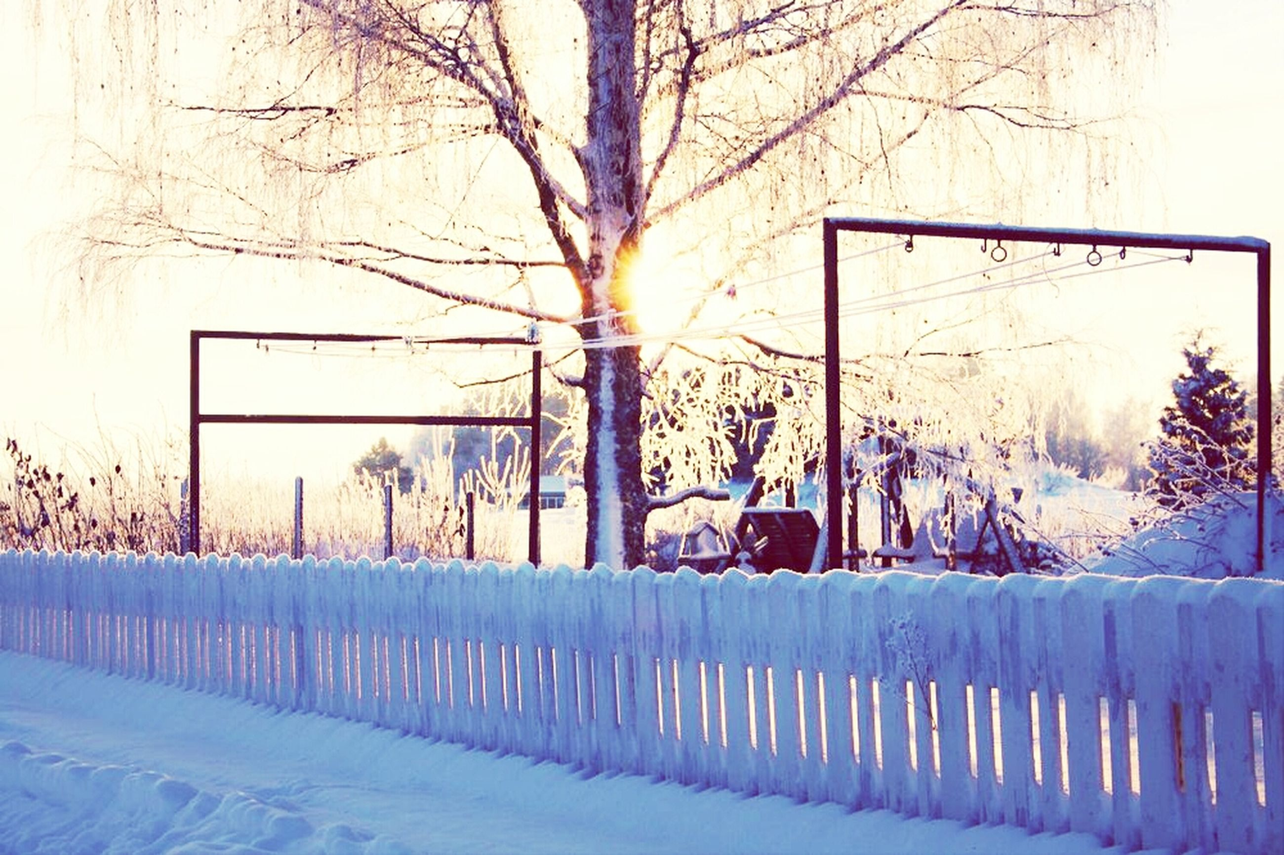 snow, winter, cold temperature, tree, season, fence, bare tree, weather, covering, built structure, sunlight, nature, railing, architecture, tree trunk, building exterior, field, sky, sun, branch