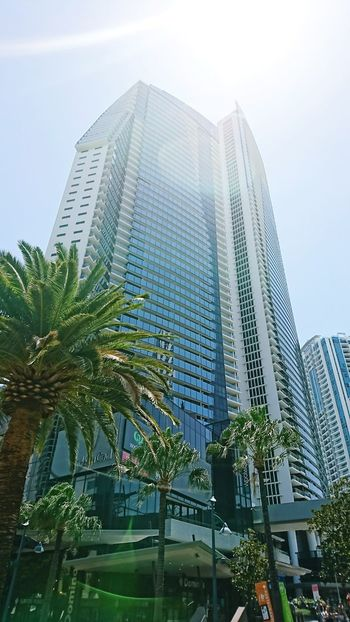 The City Light Skyscraper City Sky Business Modern Business Finance And Industry Architecture Low Angle View Outdoors Office Tree Day Urban Skyline Downtown District No People Surfers Paradise, Australia Sunnyday☀️ Sunlight