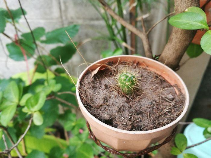 Mom's cactus