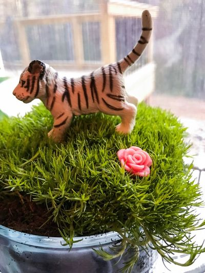 Flower Plant Animal Themes Indoors  No People Day Nature Close-up Tiger Beauty In Nature Rock - Object Landscape Outdoors