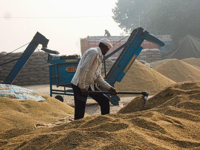 Rear view of man working on field