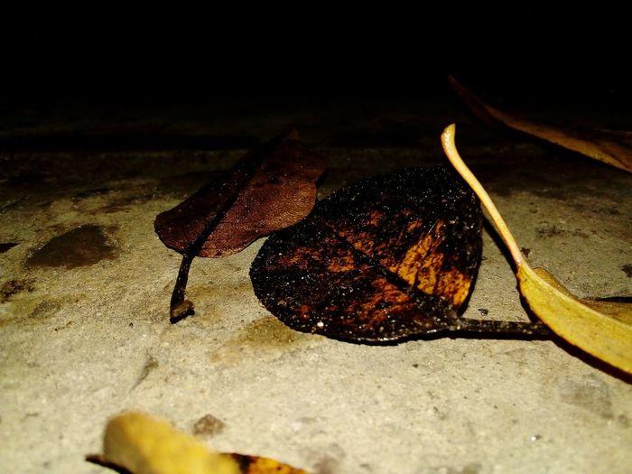 noche de otoño