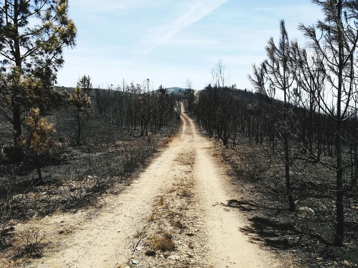 Outdoors No People Gois, Portugal Burned Tree Fire Catastrophy Portugal Sadness Mourning P10lite Tree