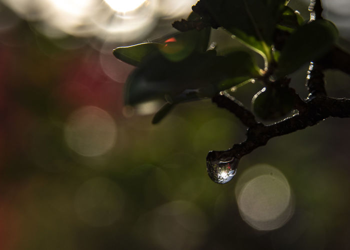 Close-up of raindrops on tree