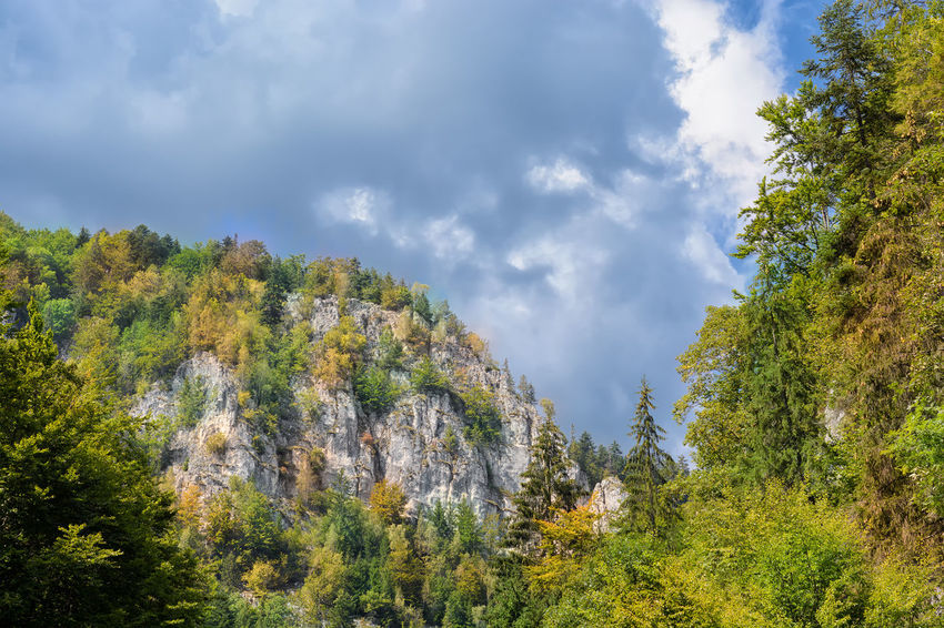 Looking for the storm Autumn Autumn Colors Carpathian Mountains Carpathians Green Color Nature The Great Outdoors - 2017 EyeEm Awards Beauty In Nature Cloud - Sky Dark Clouds And Sunshine Day Forest Landscape Low Angle View Mountain Mountains Outdoors Piatra Craiului Rocks Scenics Sky Sunlight And Shadow Tranquil Scene Trees And Sky
