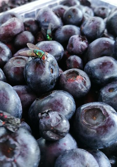 Nature Nature Photography Fly Blueberries