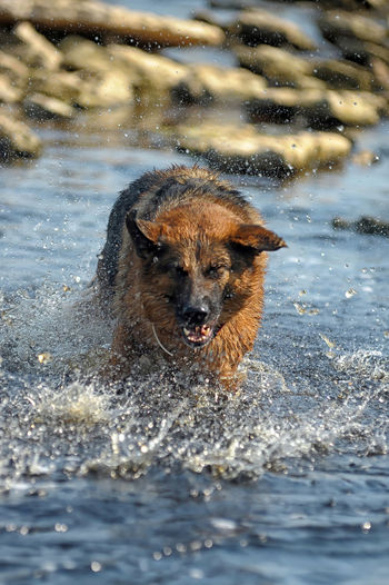 Close-up of dog in water