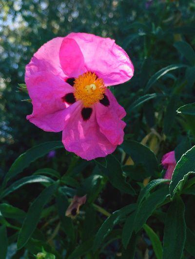 Urban Spring Fever Flowers,Plants & Garden Water Conversation Park.
