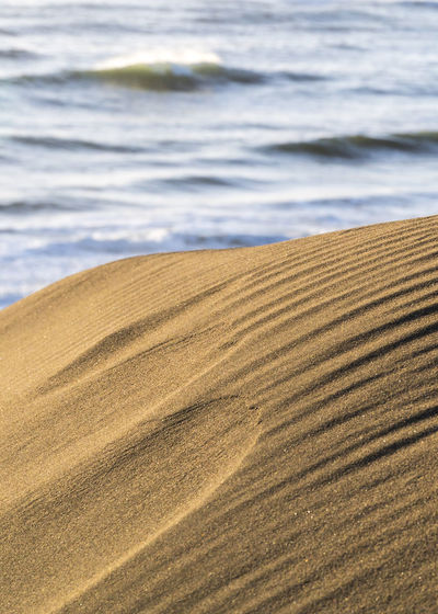 Mind the details. Beach Day Nature Outdoors Sand Sand Dune Tranquil Scene Tranquility Water