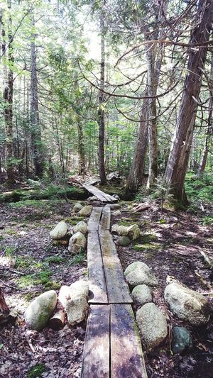 Out In The Wilderness Wilderness Hidden Places Mainewilderness Maine Wooden Path Denseforest Beautiful Nature Forest Path Forestwalk