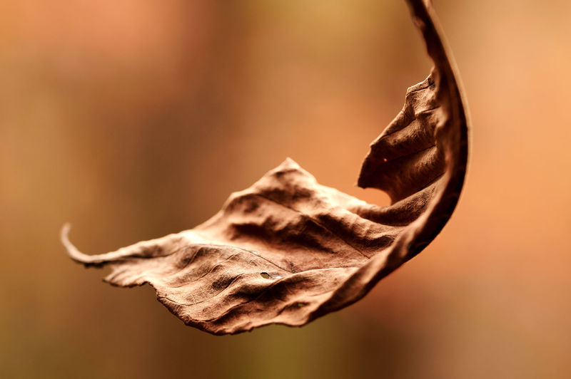 Close-Up Of Dried Plant On Dry Leaf
