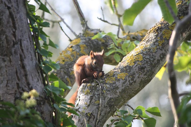 Low angle view of squirrel eating nut on tree