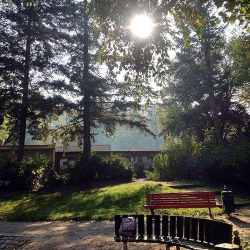 TP4L Tree Iphone5C Photo Poetischundso Sky Sun Praktikum Forest Forever Freiheit Green Home Berlin Spielplatz Kindergarten