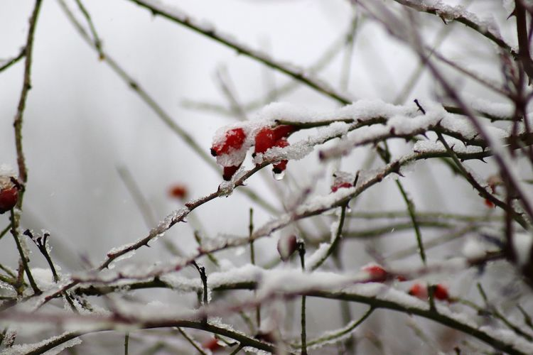 Close-up of frozen tree