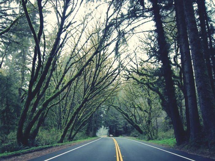 Kon-Tiki: Your Adventure Somewhere In Redwood