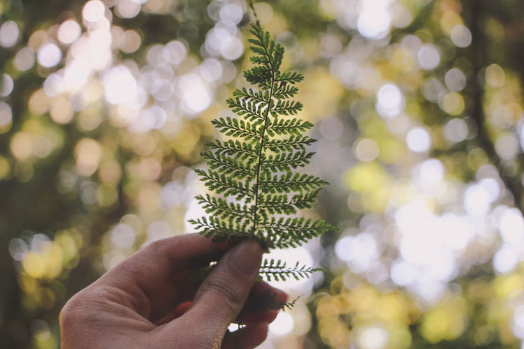 Cropped image of hand holding pine tree leaf at park