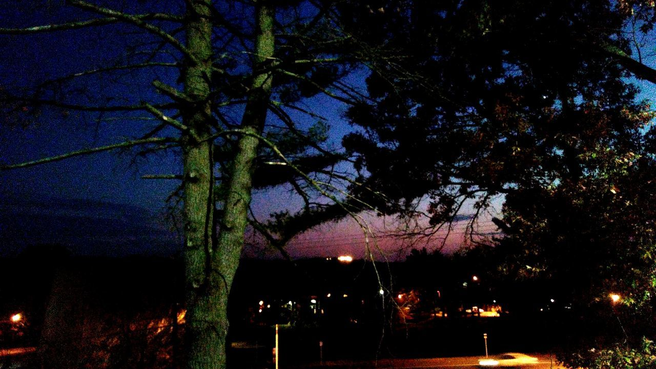 tree, night, branch, beauty in nature, nature, no people, outdoors, growth, scenics, tranquility, sky, illuminated