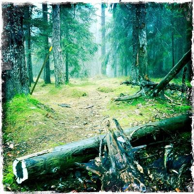 Mer dimma .. Sjuvallsleden Delsbo H älsingland  öråsen