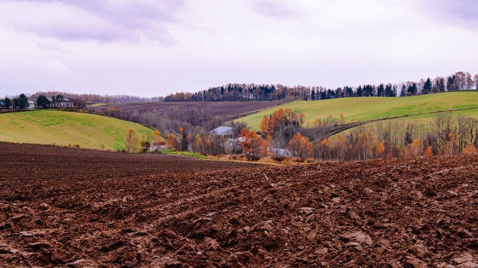 Plowed field in farmland terrace in Autumn, Hokkaido, Japan Landscape Sky Environment Land Tranquil Scene Scenics - Nature Tree Tranquility Nature Field Beauty In Nature Plant Rural Scene Agriculture Plowed Field Outdoors No People Farmland Terrace Terraced Field Farmhouses Japan Hokkaido Furano Travel