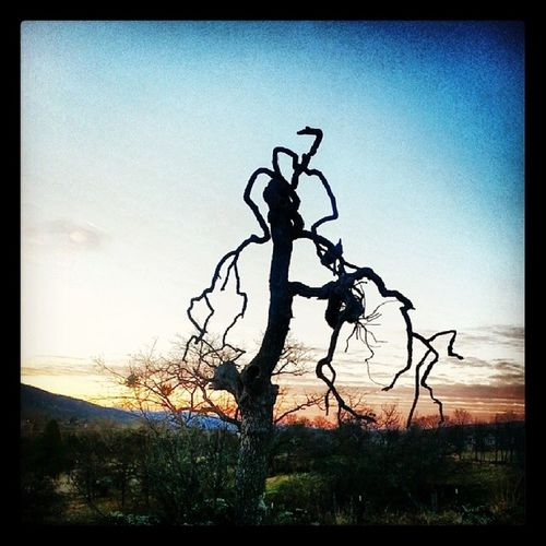 Tree Nature Silouette NaturalBeauty Southernoregon Oregon Ashland Dramatic Sunset Colorful
