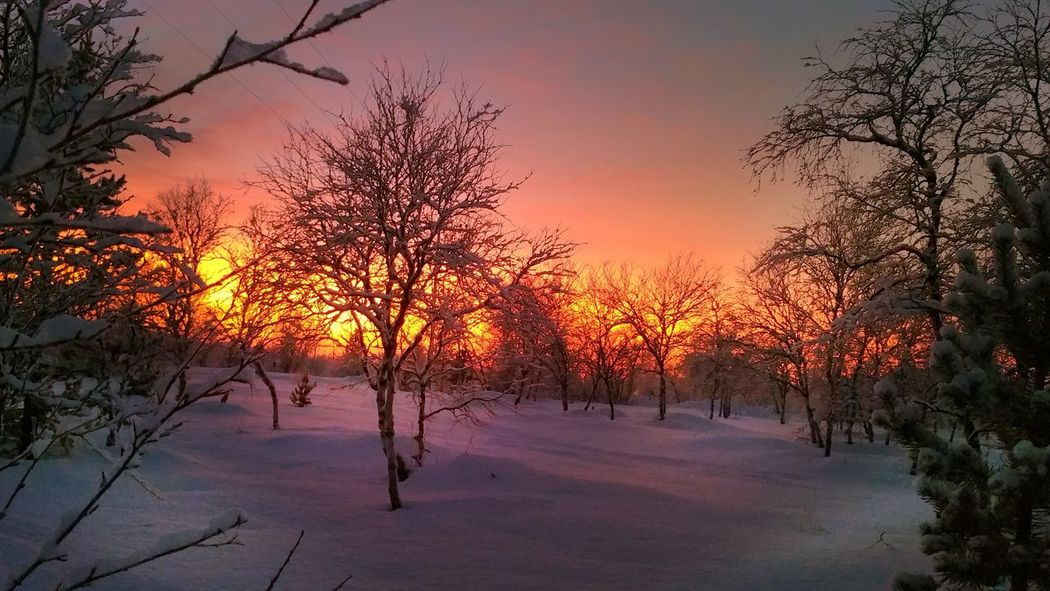 -39 degrees. It is winter 👅👍 EKstreme Taking Photos Hello World Relaxing Enjoying Life North Of Norway Northennorway Norway Finnmark Nature Photography EyeEm Best Shots Learning EyeEm Nature Lover First Eyeem Photo Landscapes Lanscape Photography Bestfoto Colors SunshineWhinter Neiden Check This Out