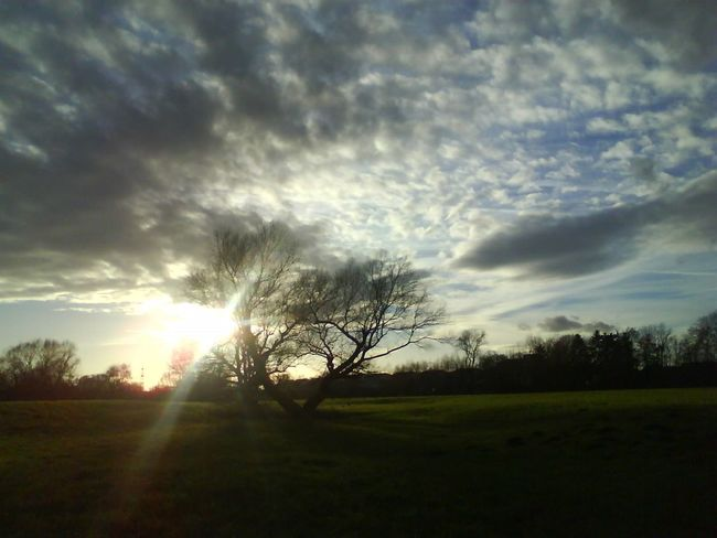 evening atmosphere Beauty In Nature Cloud - Sky Day Evening Atmosphere Field Grass Growth Idyllic Landscape Nature No People Outdoors Scenics Silhouette Sky Sun Sunbeam Sunlight Sunset Tranquil Scene Tranquility Tree