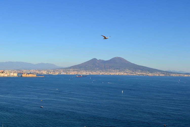 Naples Naples Bay Vesuvio Vulcan Animal Themes Animals In The Wild Beauty In Nature Beauty In Nature Bird Blue Clear Sky Day Flying Italy Mid-air Mountain Nature No People One Animal Outdoors Scenics Sea Sea And Sky Sky Water