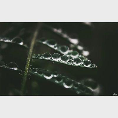 the raindrops on leaves RainDrop Rain Leave Michaellangerfotografie Fotografie Photography Photographyislife Makrophotography Makros Brandenburg Germany CripixtMovement Earthshoot Rcnocrop