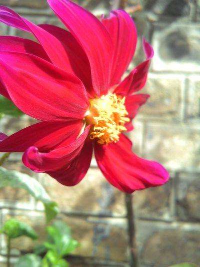 Spring Has Arrived Spring Flowers Uet Taxila Pakistan Taxila