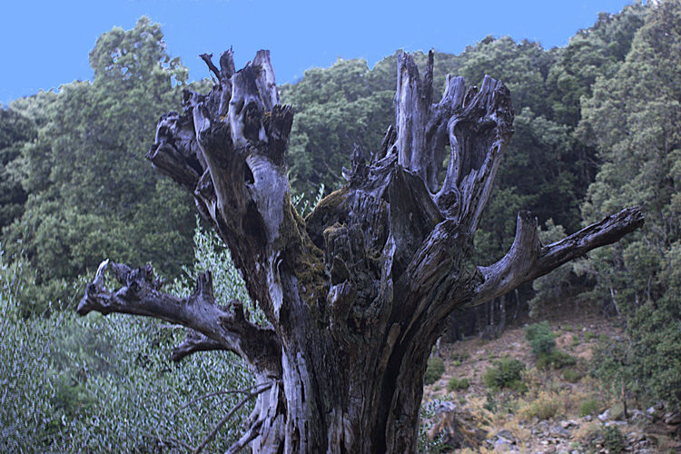Panoramic view of dead tree against sky