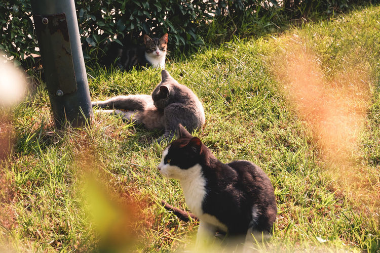 View of two cats on land
