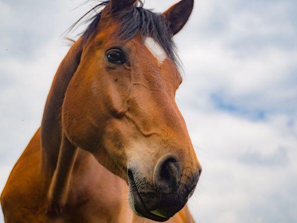 Horse One Animal Nature Liberec Czech Republic Olympus OlympusPEN