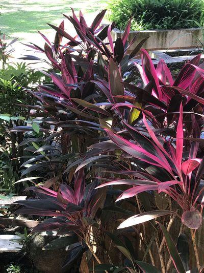 Plants Growth