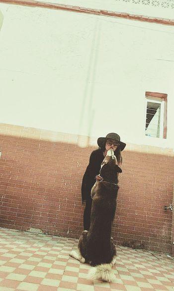 Babydog Dante Loyalty Sitting Love Without Boundaries