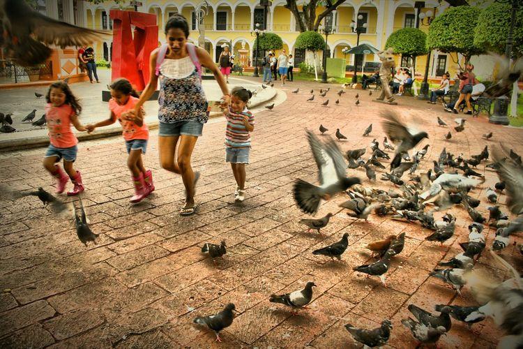 JugandoEnPaz Mexico_maravilloso Mexico De Mis Amores Mexicolors Maya_dcv Campeche Caminandoporlavida EyeEm Gallery Color Photography