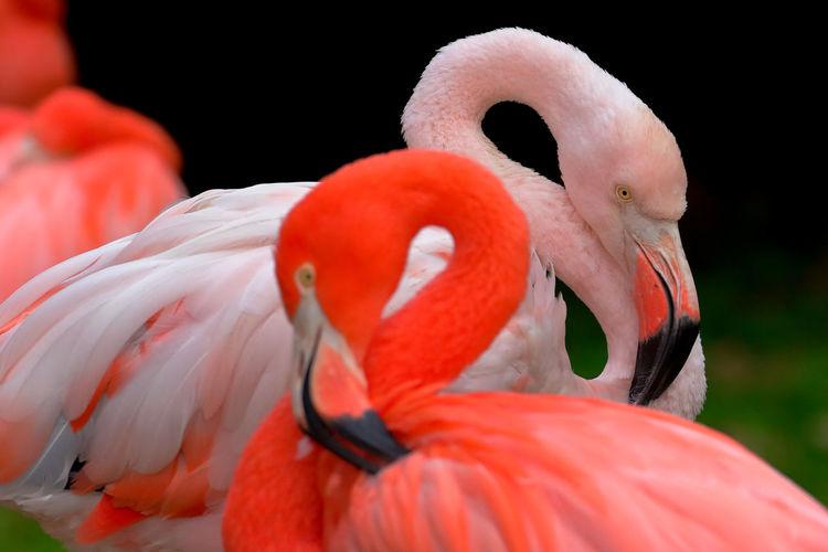 Close-up of flamingos
