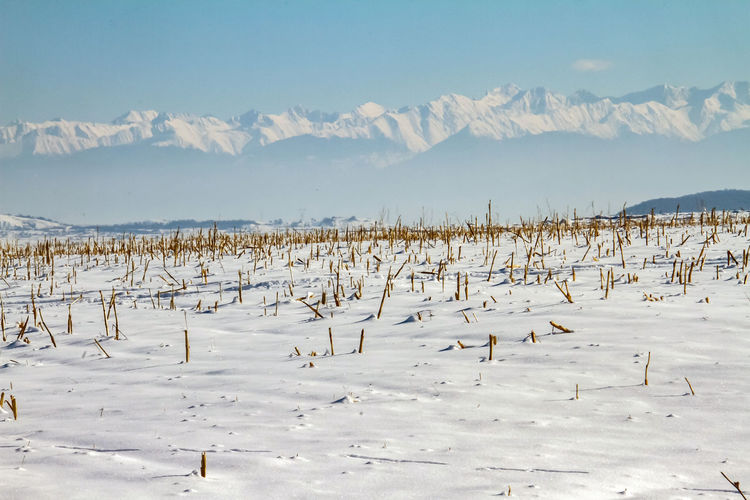 Wooden post on frozen landscape against sky