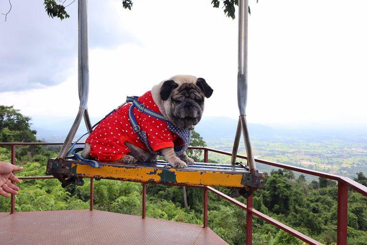 Dog sitting in park